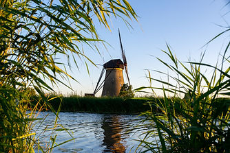 Windmolen in rietlandschap