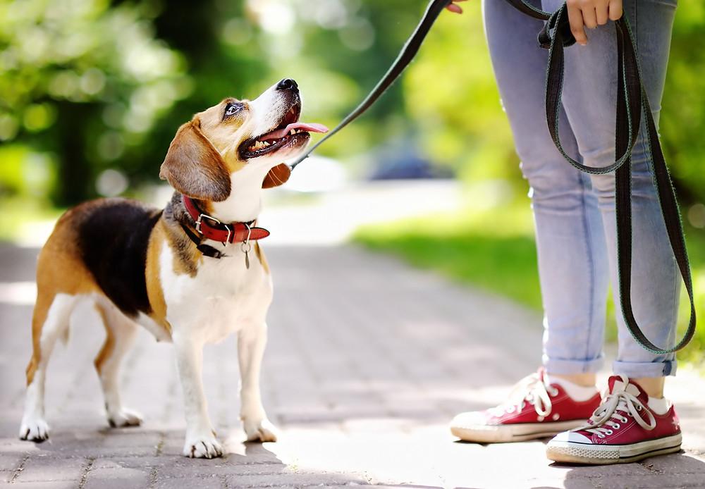 Wandeling met de pup op en rustige plaats