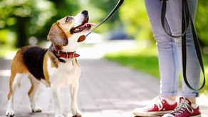 Summertime Dehydration and Your Dog