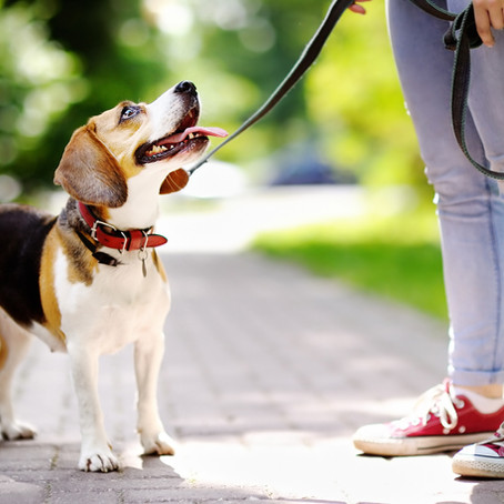 3 Ways to Improve Your Dog's Focus