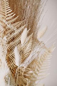 Dekorative getrocknete Pflanzen