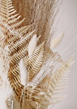 装飾的な乾燥植物