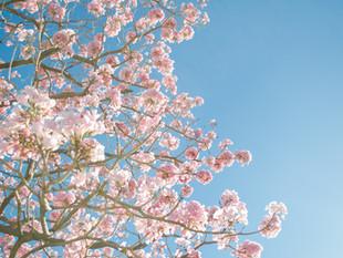 🌷Début de la saison d'été : le mercredi 31 mars