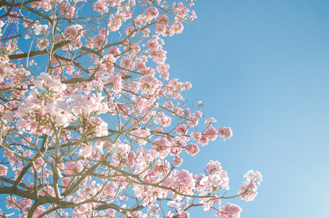 Velkommen til oppstart i Pust og Bevegelse og Medisinsk Yoga torsdag 15.april!