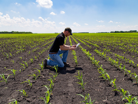 5 ejemplos de empresas que triunfan en el sector de la agrotecnología