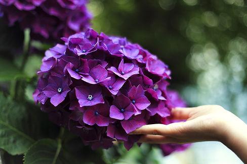 Purple Blossom