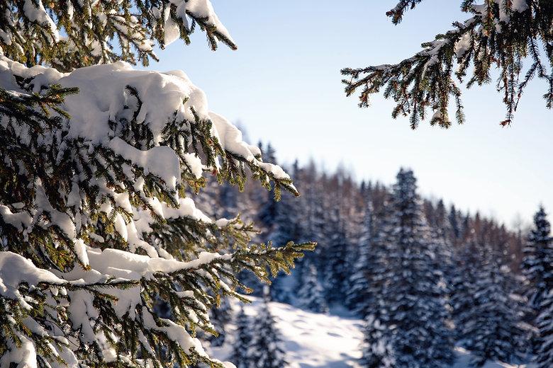 Лес Снег