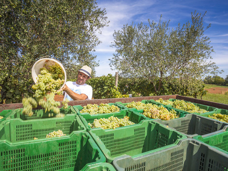 UC Davis Launches $3 Million Project to Improve Farmworker COVID Safety