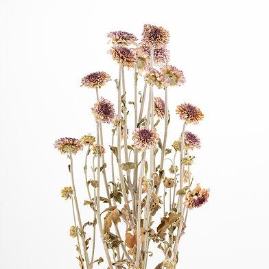 trockene Blumen
