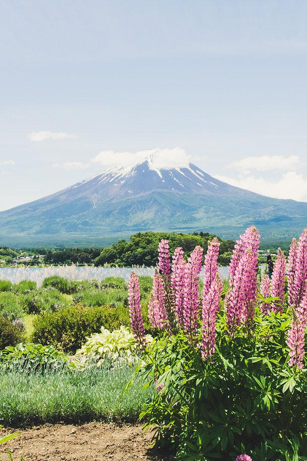 富士山麓に咲く植物