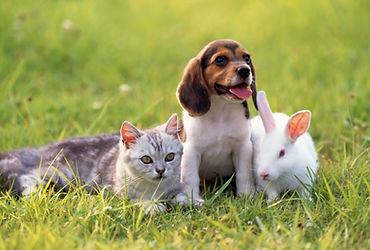 仲良し仔犬と仔猫と白ウサギ