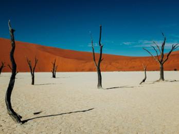 Ciniche Considerazioni sull'Apocalisse Climatica
