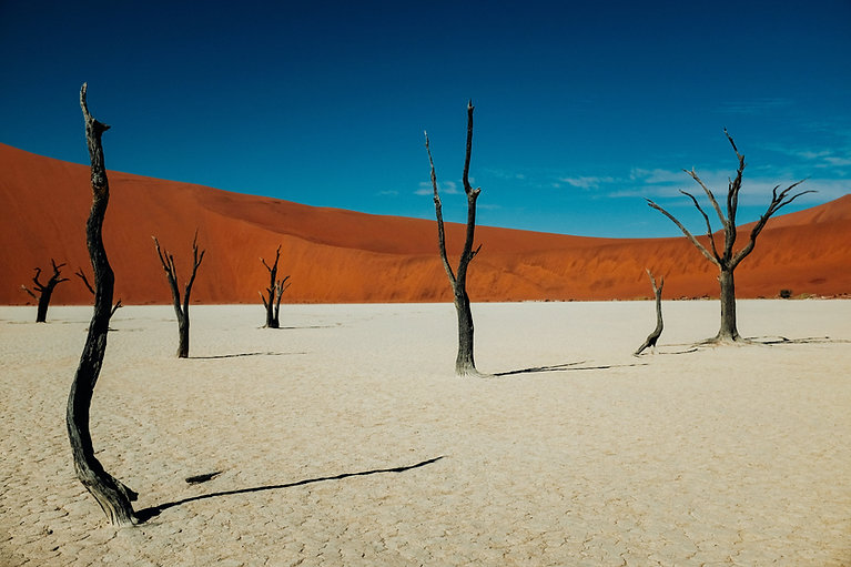 Nature désert