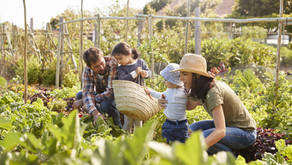 Hug Yourself and your family by growing your own food