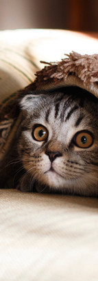 kat onder deken