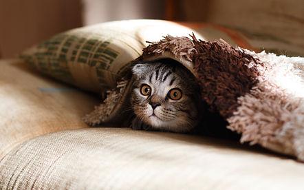 毛布の下のソファ猫