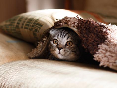 סיפור מקרה - אמא עם פוביה מחתולים