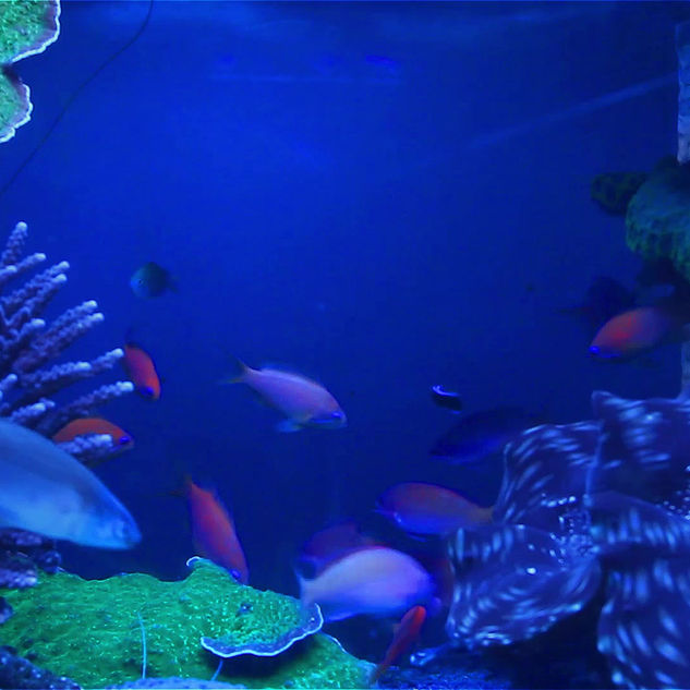 Fisch-Schwimmen im Aquarium