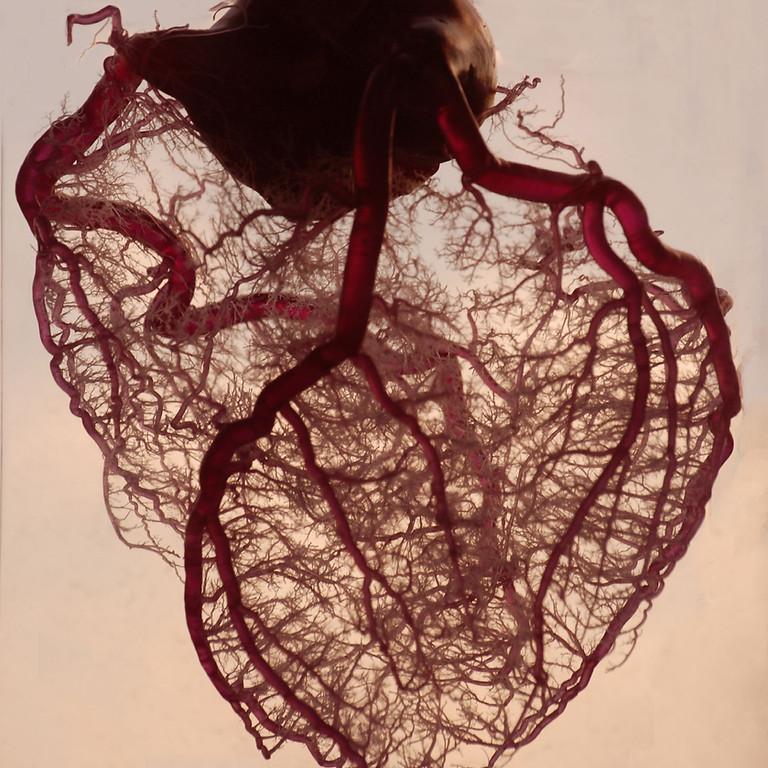 Atelier Cohérence cardiaque avec Sylvie Volery (Quirao)