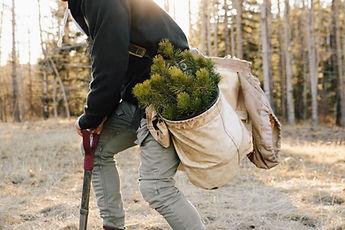 Planting New Trees