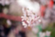 静岡 占い 手相 四柱推命 風水  お祓い 供養 厄払い 除霊 浄霊