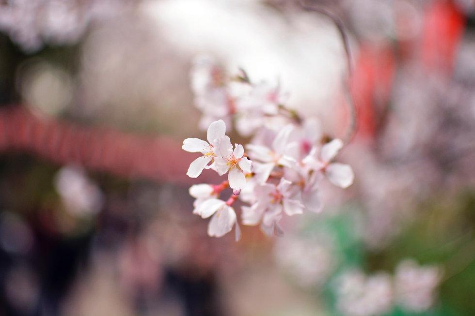 Pétales de fleurs blanches