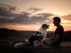 The Value of Being Mindful & Present With our Dogs.