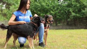 Brasília de Minas promove o Dia D para imunização de cães e gatos neste sábado