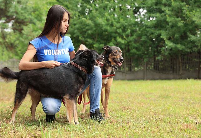 Fille avec des chiens