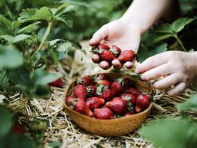 Autocueillette de fraises | Rabais sur activité