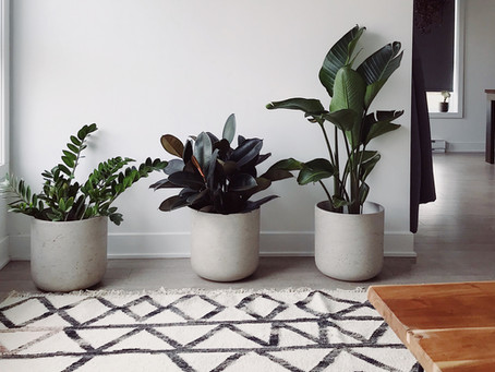 3 Ways to Grow Your Indoor Plant Collection