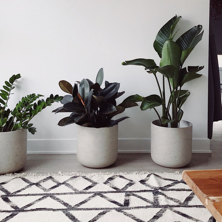 Why Houseplants are The Perfect Choice for Your Lockdown Friend(s)