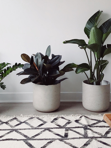 A Guide to Houseplant Care