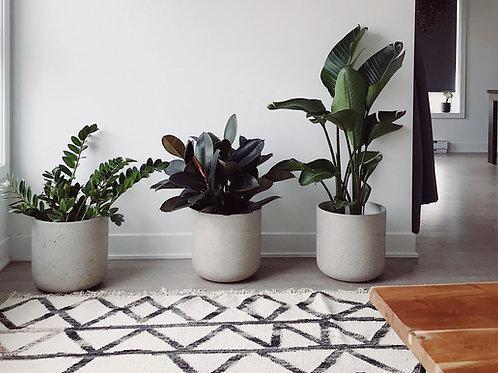 Grünpflanzen ver. Sorten im Keramikübertopf mit Dekor