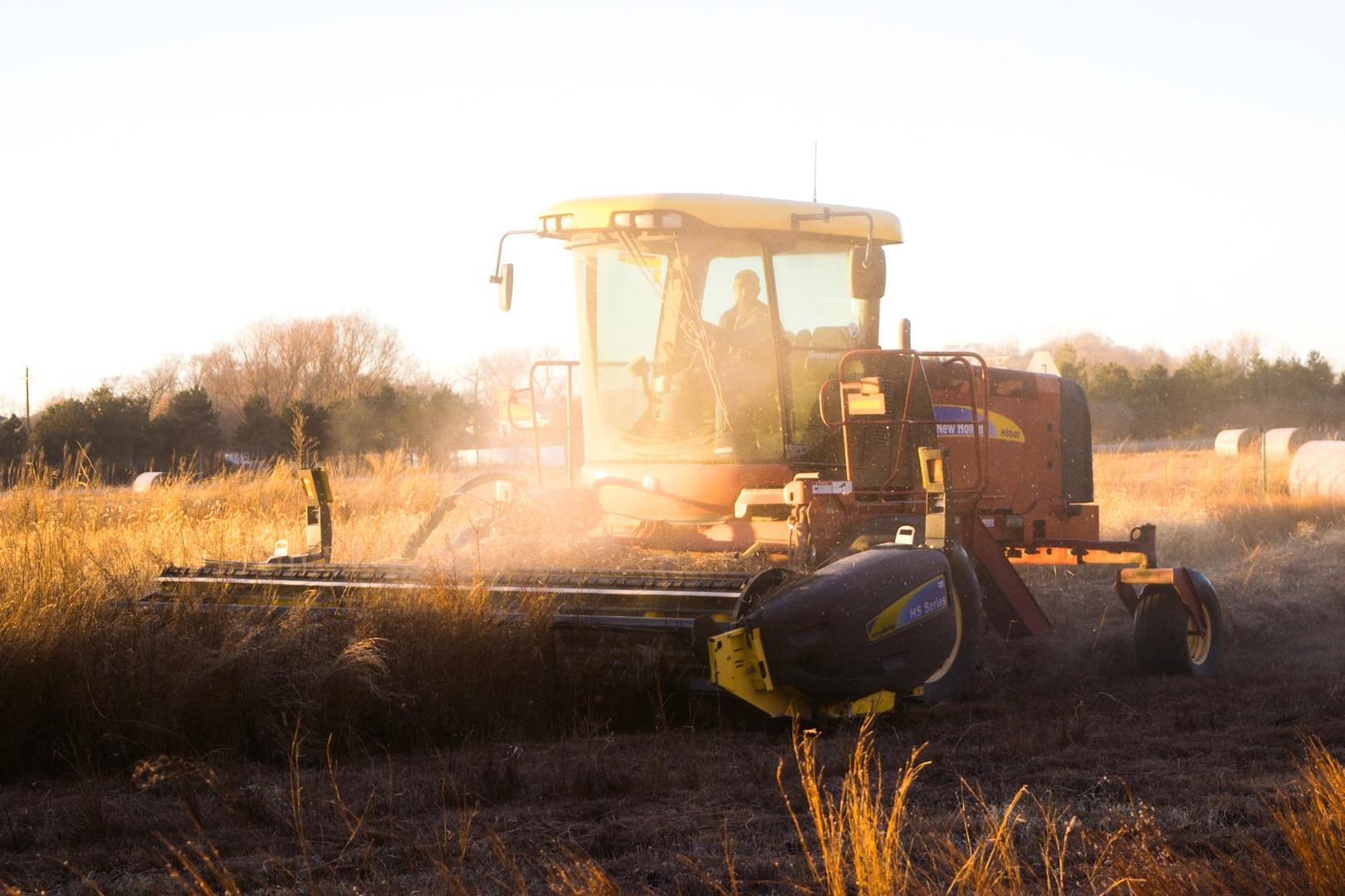 Sunset Harvest