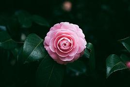 Fleur de fleur rose