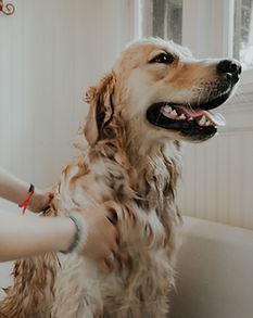 Gepflegter Hund