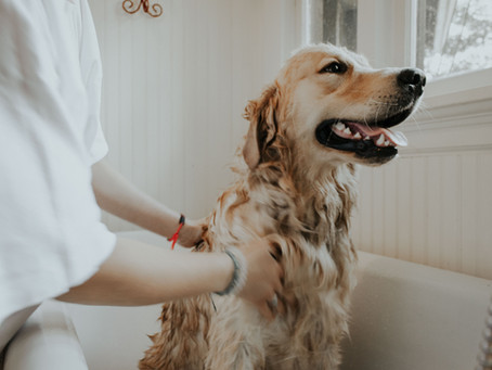 How To Give Your Pet A Medicated Bath