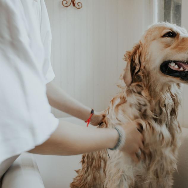 犬のお風呂
