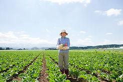 野菜の収穫