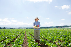 Agricultor escolher legumes