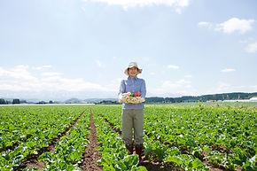 Landwirt pflücken Gemüse