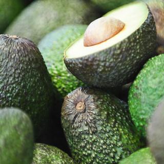 SHEM Avocado Oil