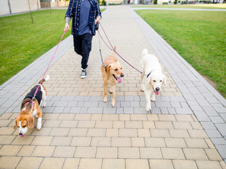 Beneficio de Pasear a tu Perro