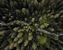 Foresta dall'alto