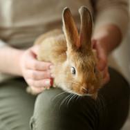 Pet The Bunny