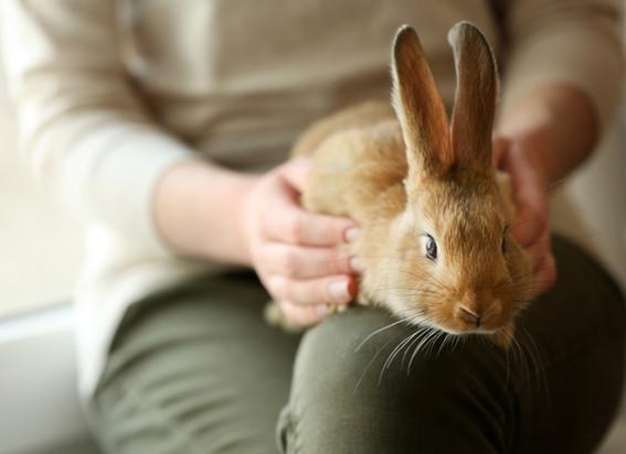 pet-the-bunny