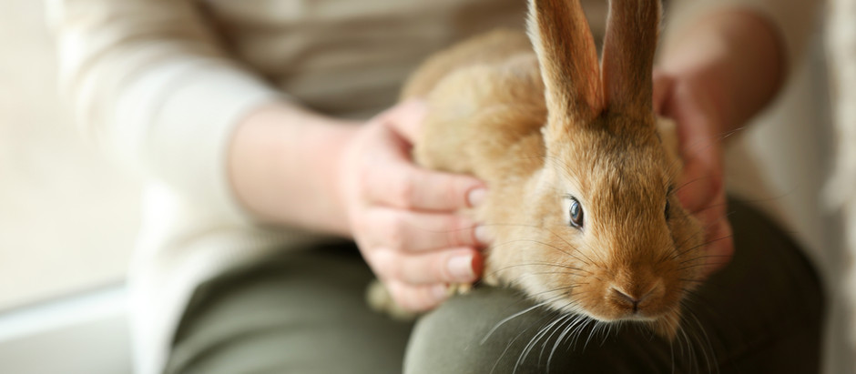 16 reasons why someone should NOT start a pet sitting business