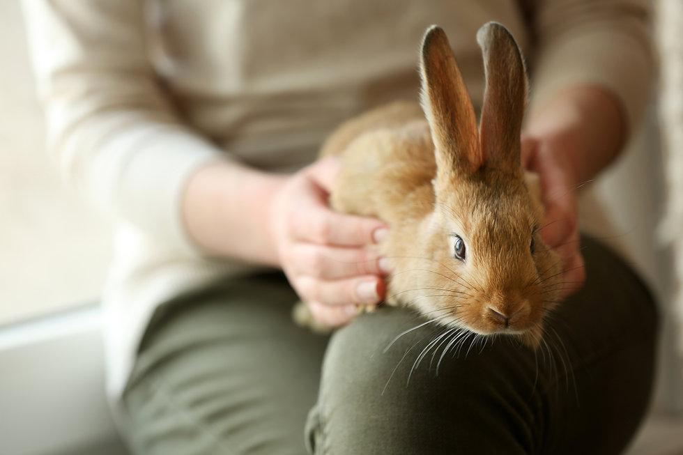 動物保護 ボランティアプログラム