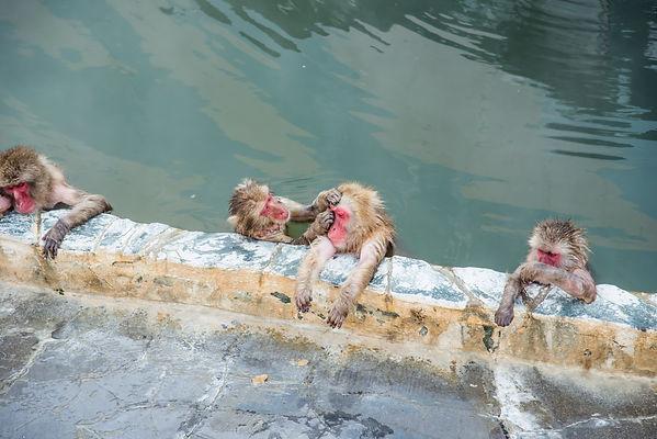 温泉を楽しむ猿